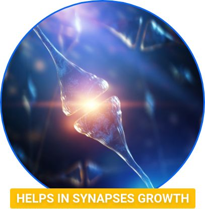 synapses-growth